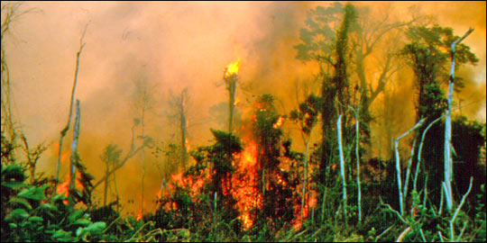 Photograph of Fire in the Amazon Rainforest