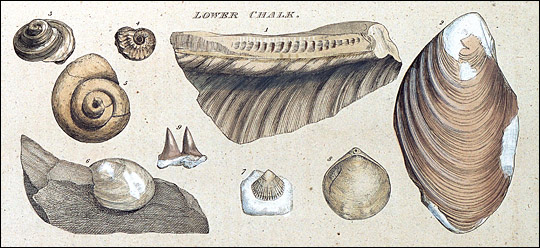 Plate from Strata Identified by Organized Fossils illustrating the Lower Chalk strata.